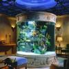 Unique and Innovative Aquarium