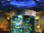 Unique and Innovative Aquarium