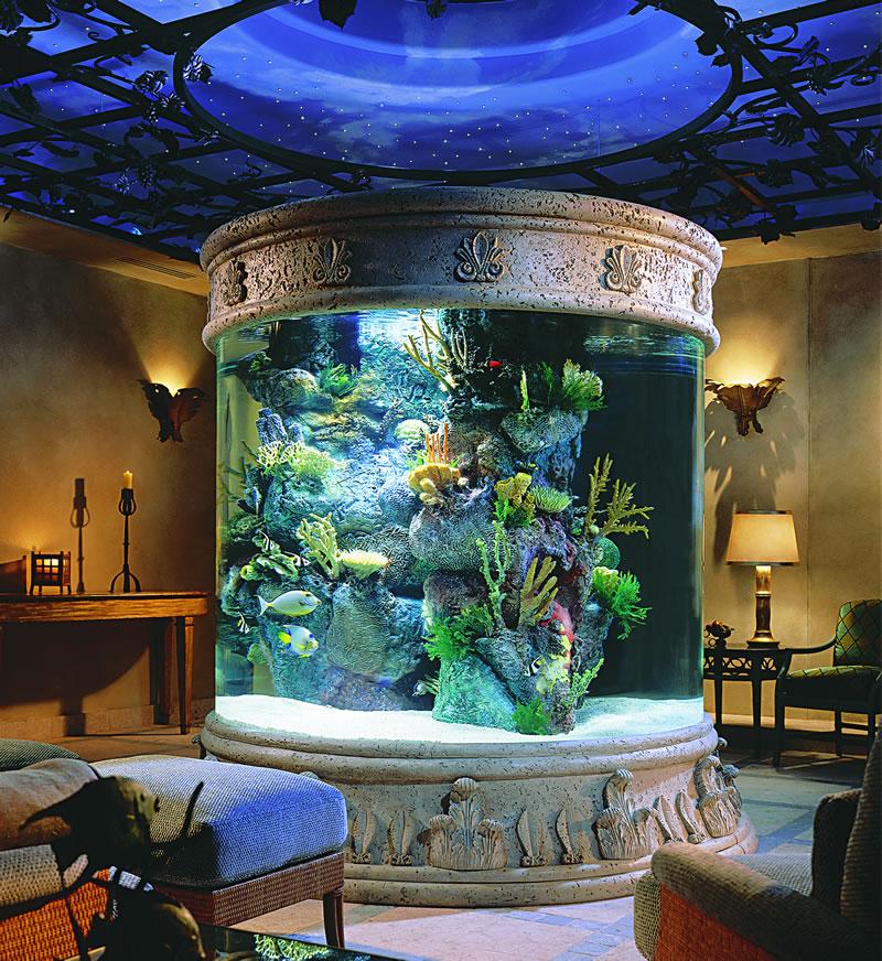 Outstanding Aquarium Design