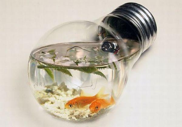 light bulb aquarium