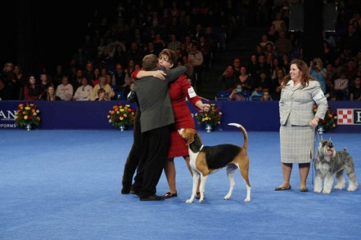 Nathan The Bloodhound Wins The 2014 National Dog Show